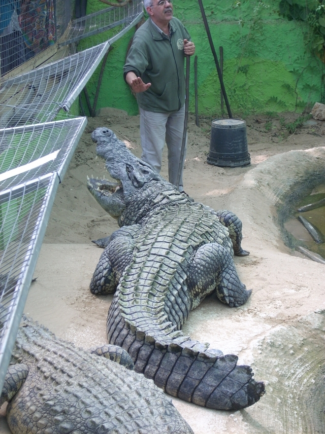 Crocodile park in Torremolinos offers guided tours and demostrations