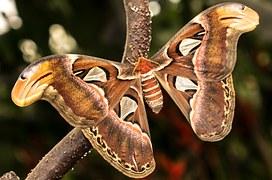 benalmadena-mariposario butterfly zoo