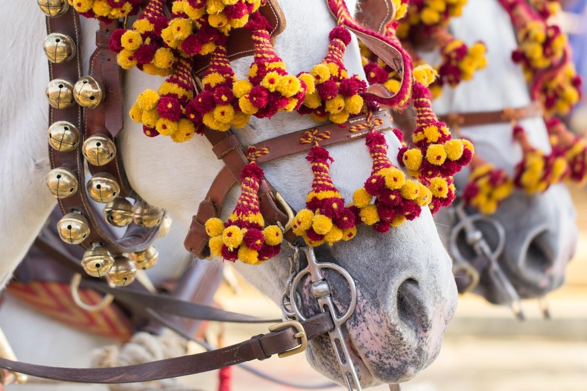 Horse Fair in Jerez de la Frontera